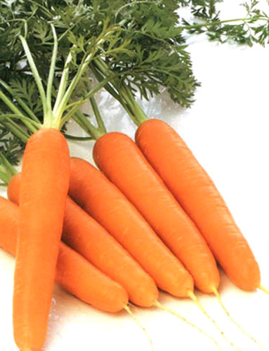 Био Моркови 1