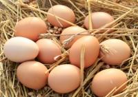 Фермерски кокоши яйца 6 бр.